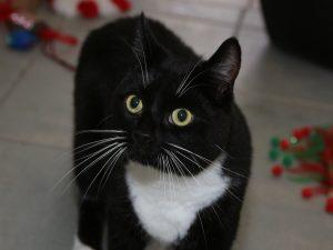 cat-sox-284734-head