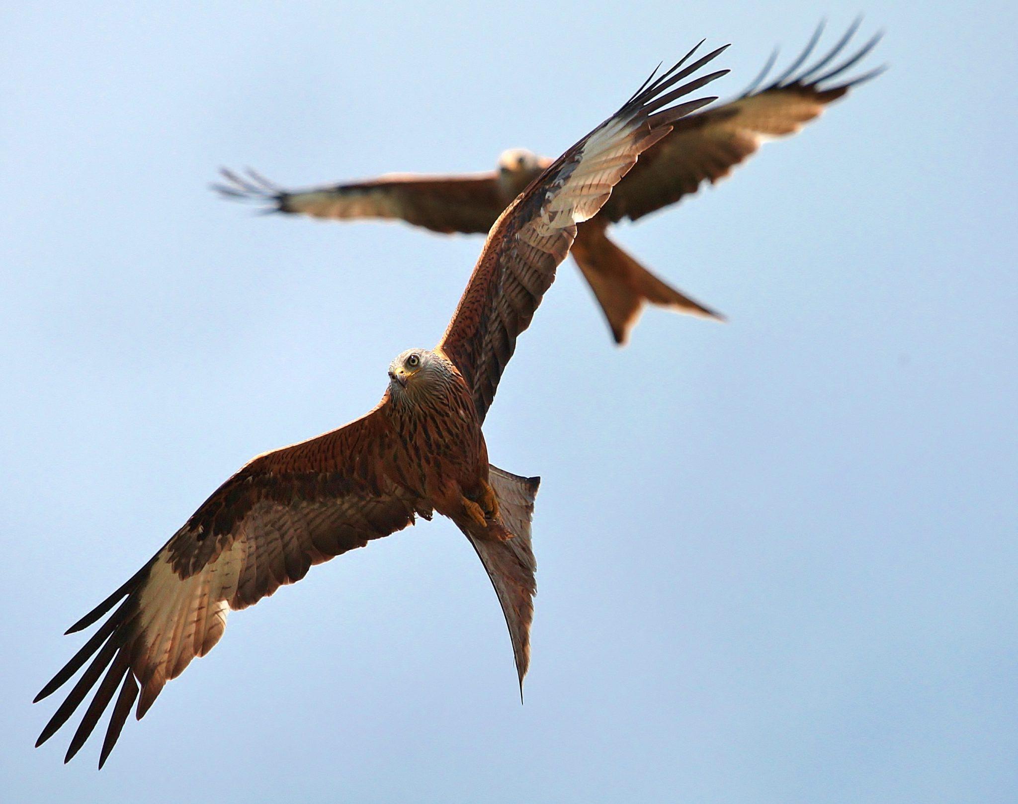 Kites – Gareth Hendly Nov 14